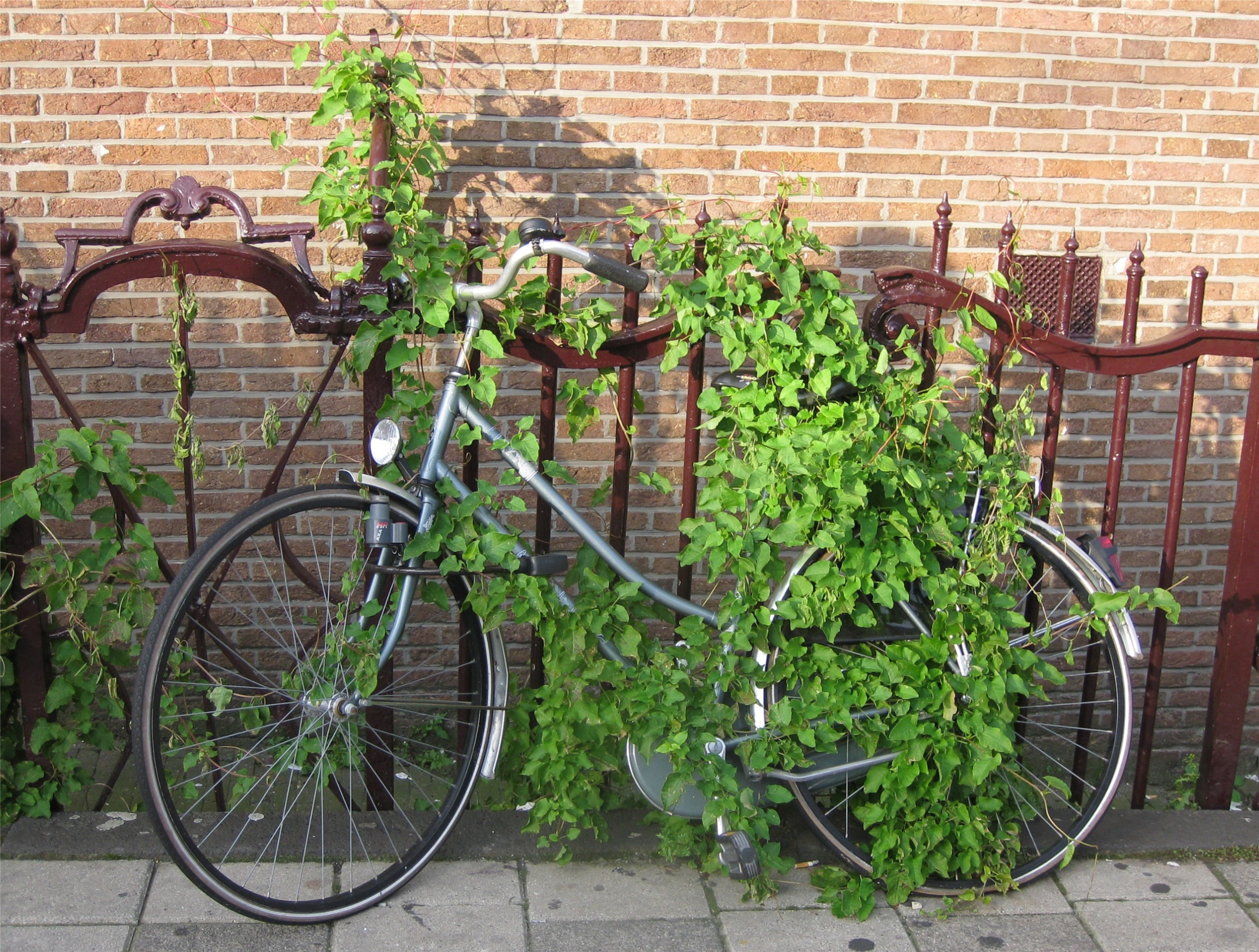 green bike lock amsterdam This attitude toward homosexual behavior is called Homophobia.