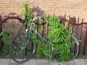 Green Bike Lock, Amsterdam (photo by Sally Reeder)